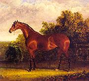 Negotiator, the Bay Horse in a Landscape John F Herring