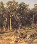 A Pine Forest Mast-Timber forest in Viatka Province Ivan Shishkin