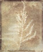 Photogenetic Drawing Willim Henry Fox Talbot