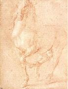 Study of a Horse PUGET, Pierre