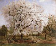 apple tree in blossom Carl Fredrik Hill