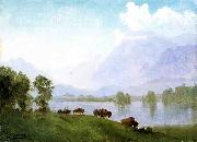 Buffalo Country Albert Bierstadt