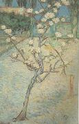 Blossoming Pear Tree (nn04) Vincent Van Gogh