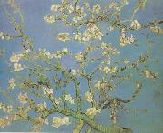 Blossoming Almond Tree (nn04) Vincent Van Gogh