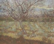 Apricot Trees in Blossom (nn04) Vincent Van Gogh