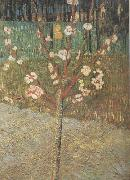 Almond Tree in Blossom (nn04) Vincent Van Gogh