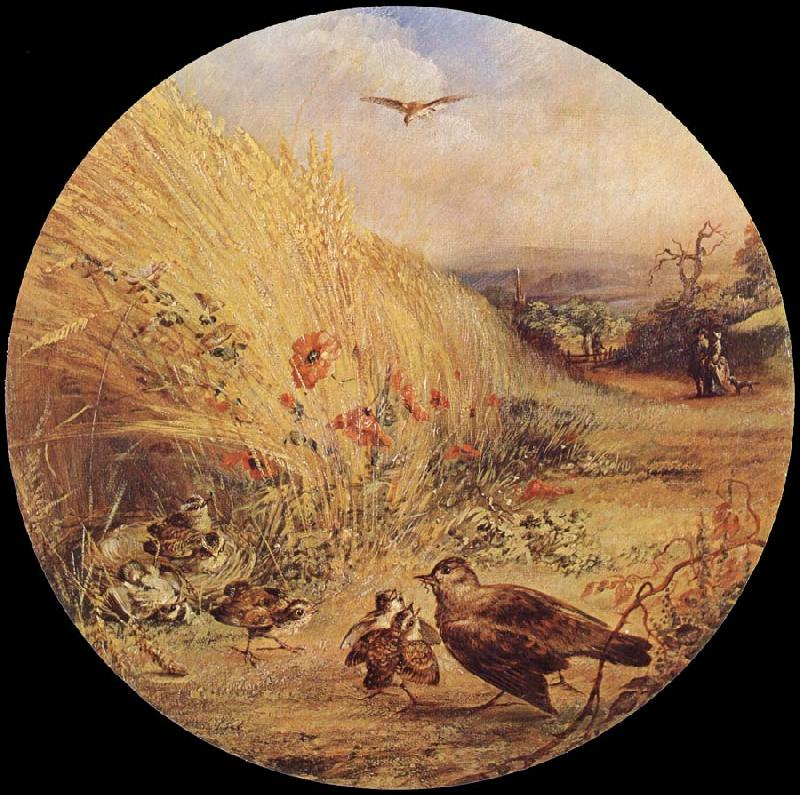 William Dexter Wheatfield with bird-s nest